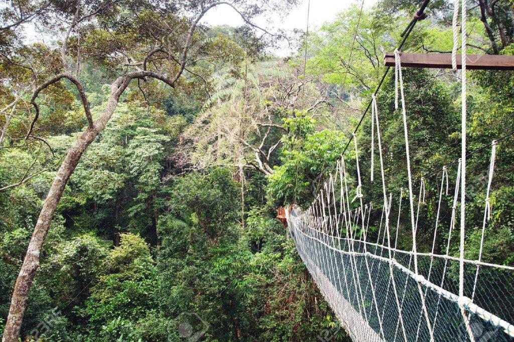 26777232-canopy-walk-in-taman-negara-national-park-malaysia-stock-photo