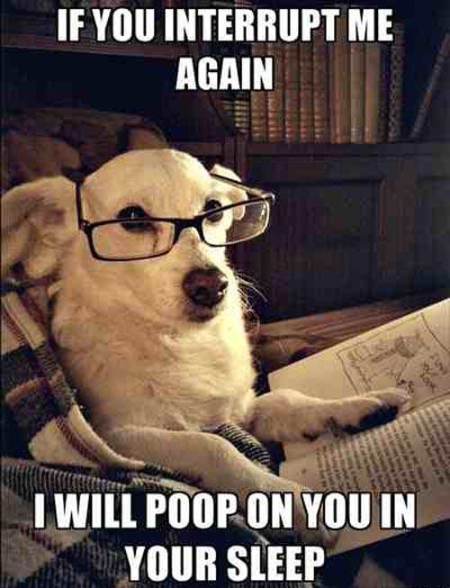 dog-reading-wearing-glasses