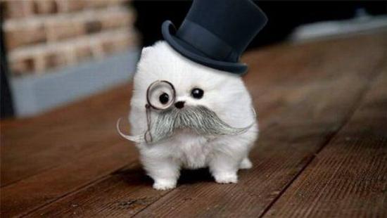 like-a-sir-dog