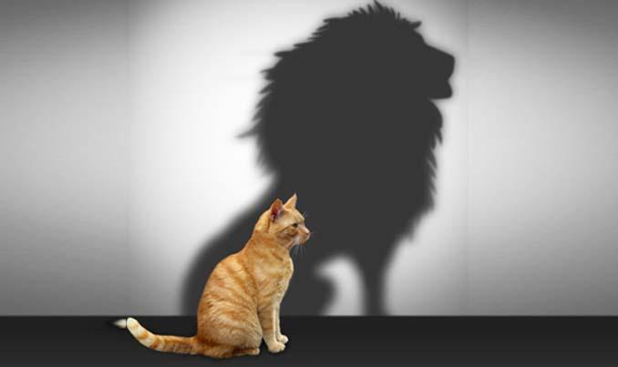 self_esteem_lion