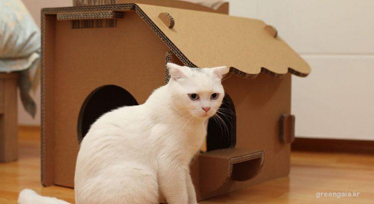 15 ไอเดียบ้านแมว