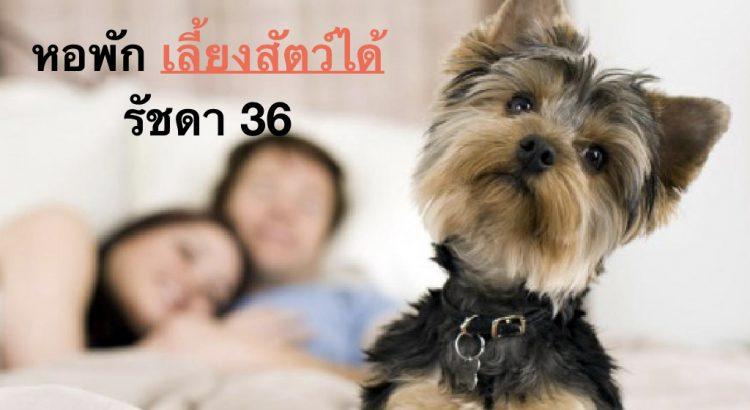 hostel-can-allow-pet-001